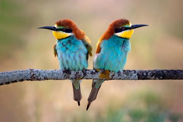 Bunte vögel auf einem ast Premium Fotos