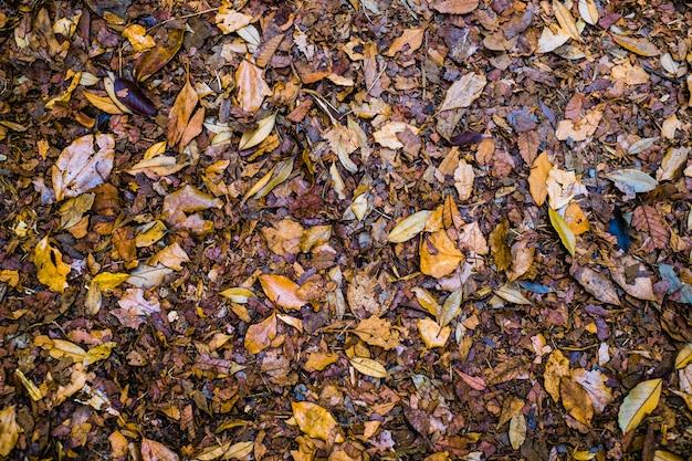 Bunter herbst gefallene blätter auf braunem waldbodenhintergrund Premium Fotos
