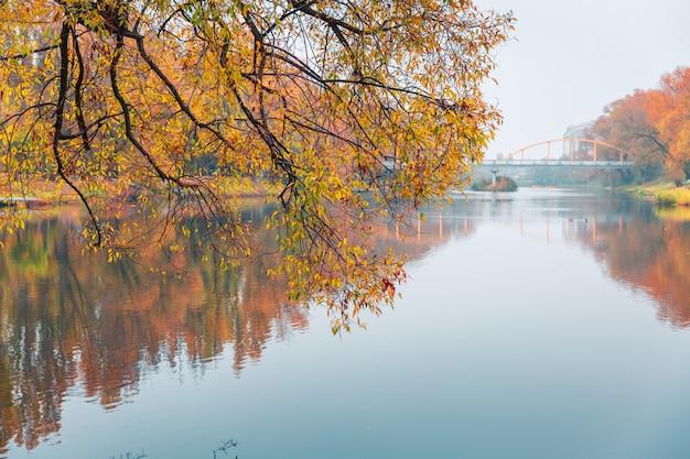 Bunter herbstpark. herbstbäume mit gelb verlässt im herbstpark. belgorod. russland. Premium Fotos
