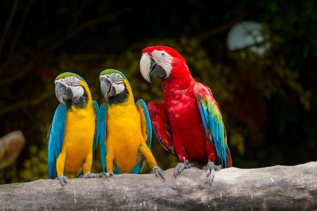 Bunter vogel macaw Premium Fotos