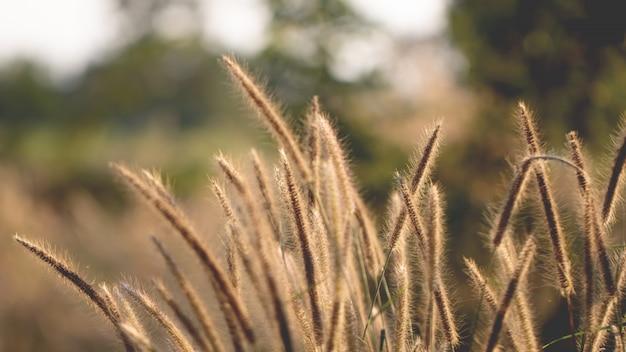 Buntes blumengras gemacht mit steigung für hintergrund Premium Fotos
