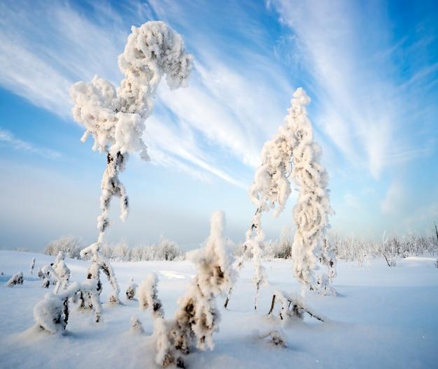 Bush trockener ivan-tee im frost auf hintergrund des himmels Premium Fotos