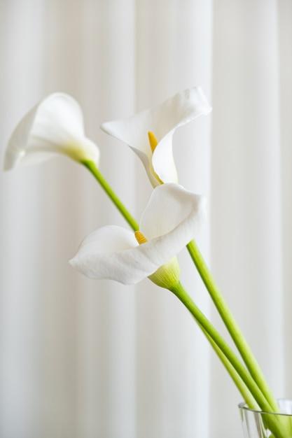 Calla lilie pflanzt blumen auf einem weißen stoffhintergrund. Kostenlose Fotos