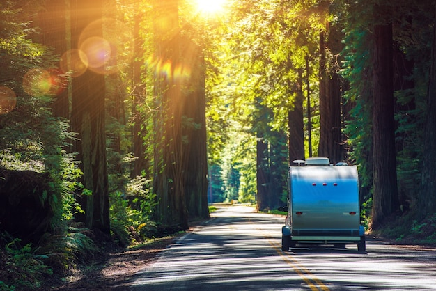 Camping in redwoods Kostenlose Fotos