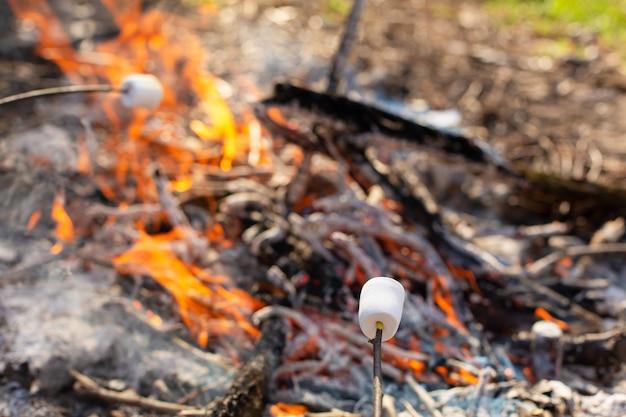 Camping lagerfeuer, marshmallows auf dem scheiterhaufen braten Premium Fotos