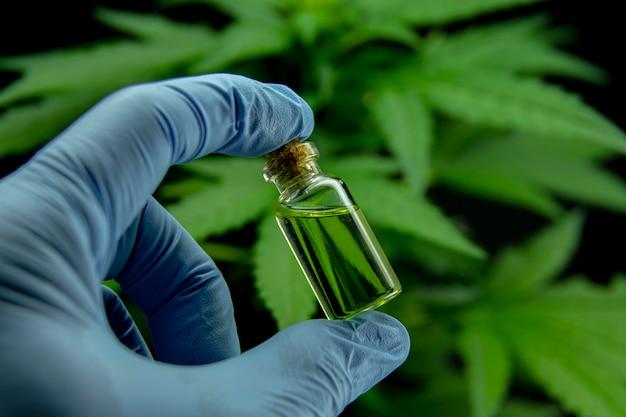 Cannabisblätter einer pflanze Premium Fotos