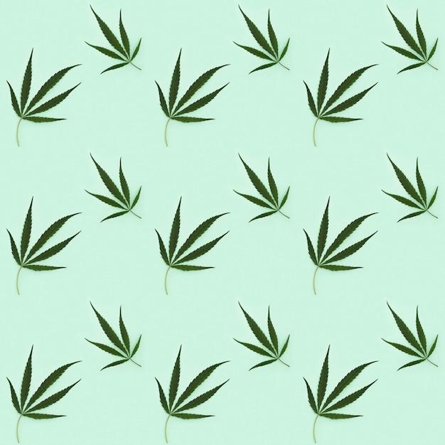 Cannabisblätter isoliert auf hellgrün Premium Fotos