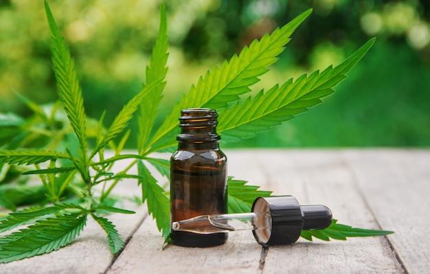 Cannabiskraut und blätter zur behandlung von bouillon, tinktur, extrakt, öl. selektiver fokus Premium Fotos