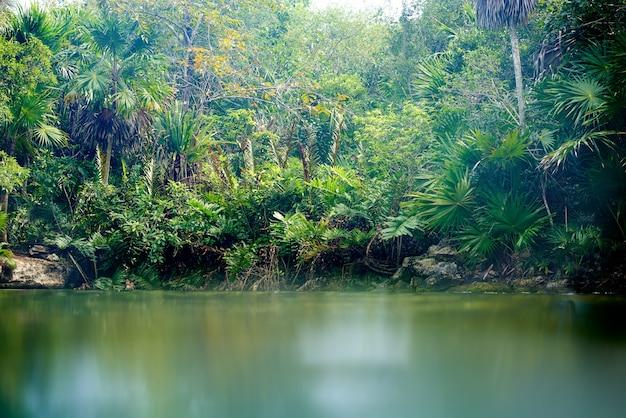 Cenote in riviera maya von maya mexiko Premium Fotos