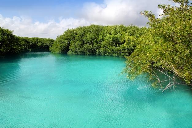Cenote-mangroven-türkiswasser maya riviera Premium Fotos