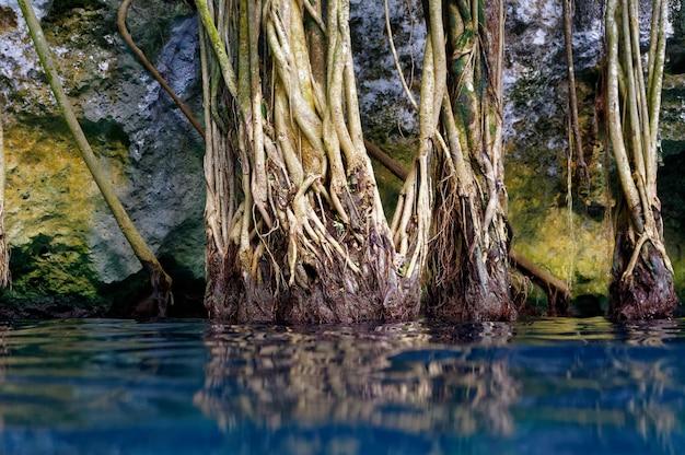 Cenote-sinkhole im maya-dschungel des regenwaldes Premium Fotos