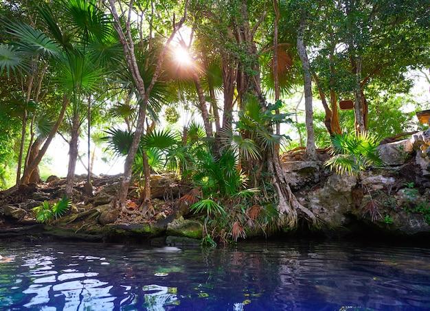 Cenote-sinkhole in riviera maya von mexiko Premium Fotos