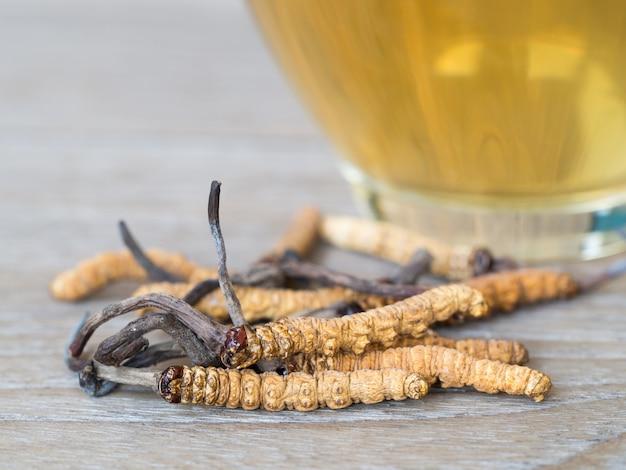 Champignoncordyceps (chong cao) dies ein kräuter. Premium Fotos