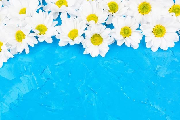 Chrysanthemen auf blauem hintergrund Premium Fotos