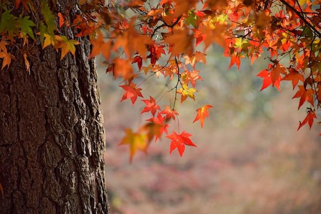 Close-up der baumstamm mit blättern in warmen farben Kostenlose Fotos