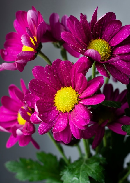 Close-up frühlingsblumen | Kostenlose Foto