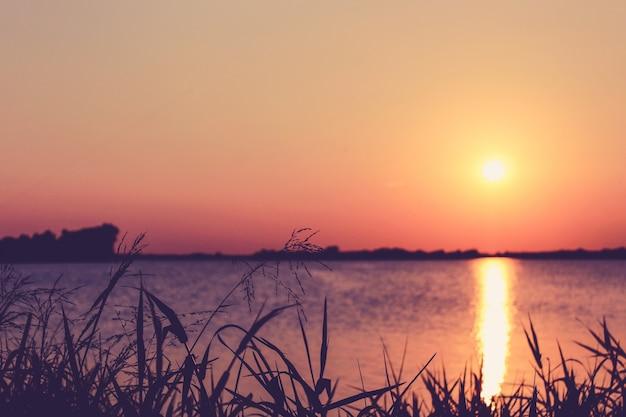 Close up gras mit einem sonnenuntergang über einem see im hintergrund Kostenlose Fotos