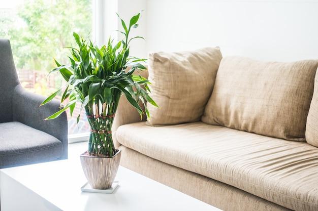 couchs mit einer pflanze in der mitte auf einem tisch download der kostenlosen fotos. Black Bedroom Furniture Sets. Home Design Ideas