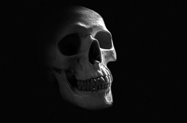Creepy Körper Schädel Anatomie Hintergrund Knochen Gehirn | Download ...