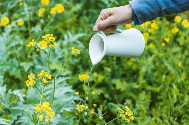 Crop hand bewässerung von blumen Kostenlose Fotos