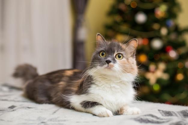 Cutie cat entspannt sich auf der couch zu hause Kostenlose Fotos