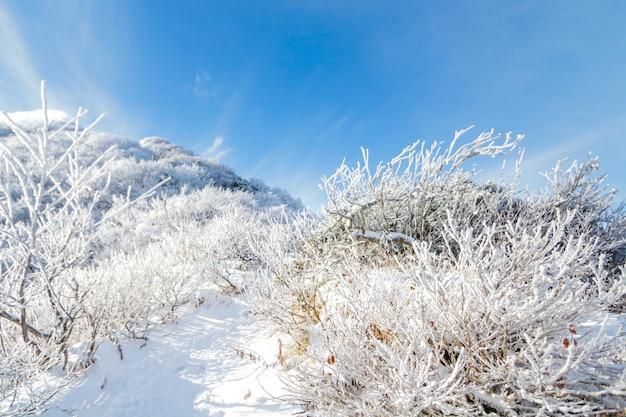 Daisen berg in japan winter haben viel schnee Premium Fotos
