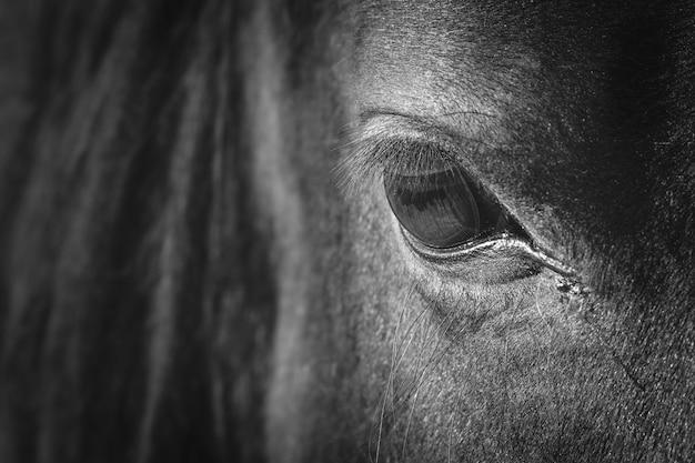 Das auge des pferdes Premium Fotos