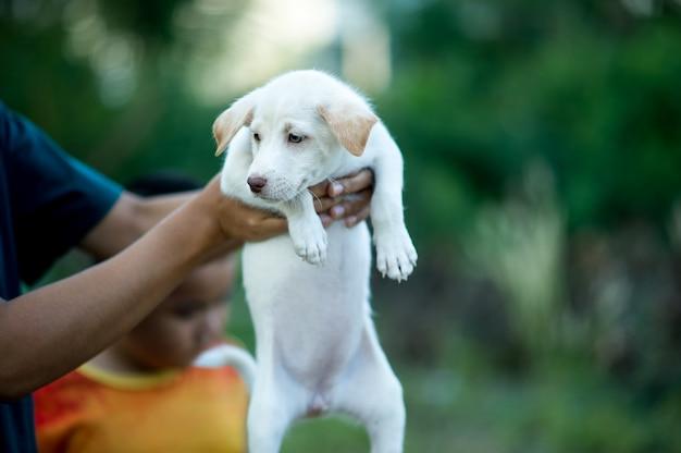 Das bild des kleinen welpen kreaturen, die mit menschen spielen können hundeliebhaberkonzept Premium Fotos