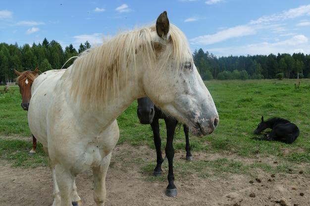 Das bild eines pferdes im wald. natürliche zusammensetzung. fotografie. Premium Fotos