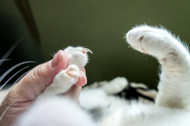 Das bild zeigt die erfassten katzenfüße vor dem schneiden der nägel Premium Fotos