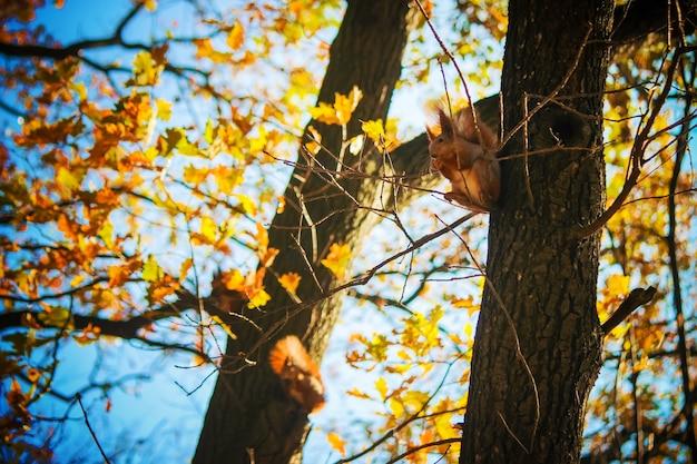 Das eichhörnchen isst nüsse. selektiver fokus Premium Fotos