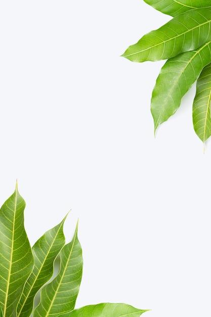 Das feld, das von der mango gemacht wird, verlässt auf weißem hintergrund Premium Fotos