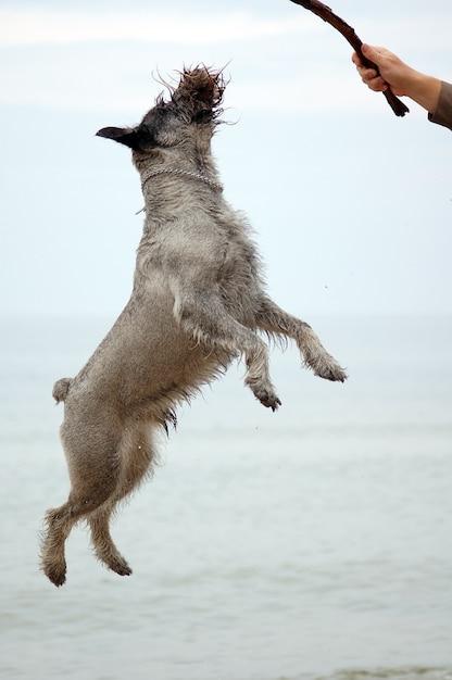 Das hundespringen Kostenlose Fotos