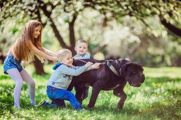 Das jungenang-mädchen, das nahen hund im park steht Kostenlose Fotos