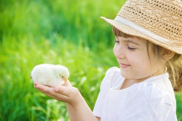 Das kind hält ein huhn in seinen händen. selektiver fokus Premium Fotos