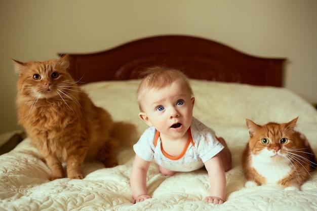 Das kleine kind und die katzen liegen auf dem bett Kostenlose Fotos
