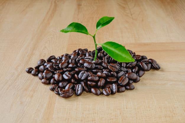 Das konzept der kaffeeplantage Premium Fotos