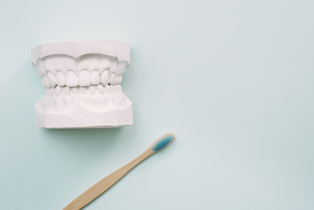 Das konzept, wie sie ihre zähne richtig putzen. bambuszahnbürste liegt auf blauem grund und neben dem gipsmodell des menschlichen kiefers. mundpflege kieferorthopäde. Premium Fotos