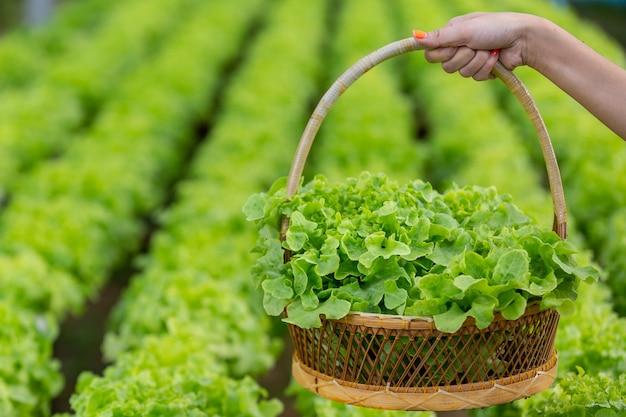 Das mädchen pflückt den salat in den korb im kinderzimmer. Kostenlose Fotos