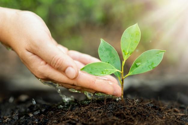 Das neue leben des jungen pflanzensämlings wächst auf schwarzem boden Premium Fotos