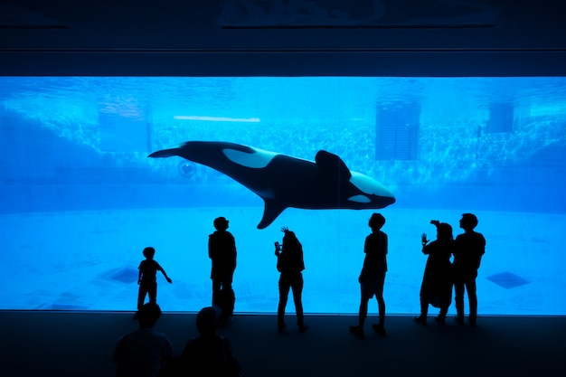 Das schattenbild der touristen, die einen schwertwal- oder killerwal am aquarium aufpassen. Premium Fotos