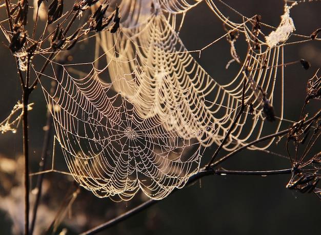 Das spinnennetz mit den tautropfen, die an den zweigen hängen Premium Fotos