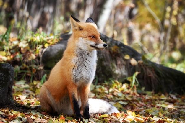 Das tier sitzt in freier wildbahn und schaut weg Premium Fotos