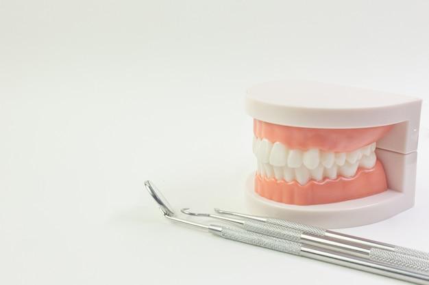 Das zahnmodell auf weißem hintergrund für zahnmedizinischen inhalt. Premium Fotos