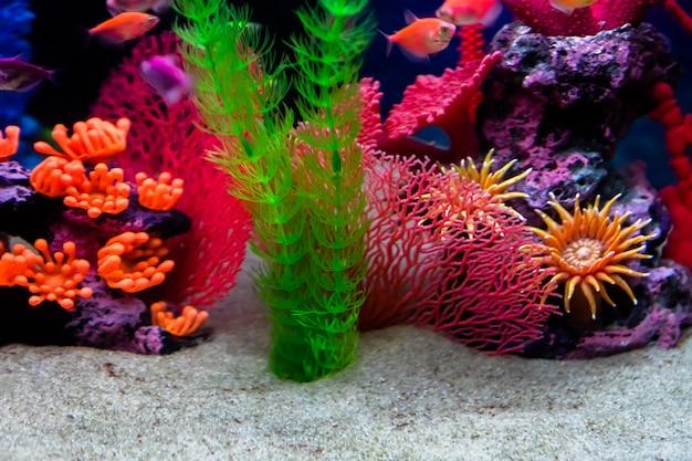 Defokussierter boden des aquariums mit weißem sand und künstlichen dekorationen. Premium Fotos
