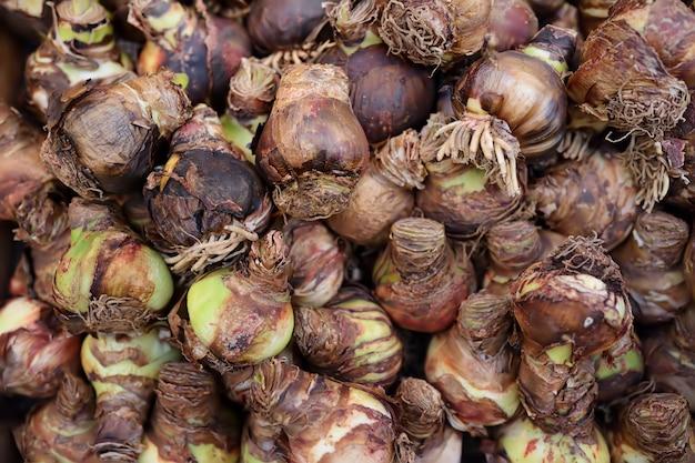 Der berühmte amsterdamer blumenmarkt (bloemenmarkt). zwiebeln der iris. Premium Fotos