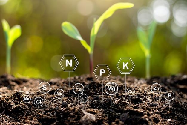 Der boden ist reich an mineralien und verschiedenen nährstoffen für den anbau. Premium Fotos