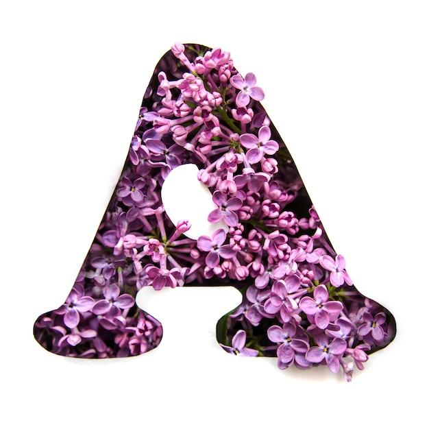 Der buchstabe a des englischen alphabets aus flieder Premium Fotos