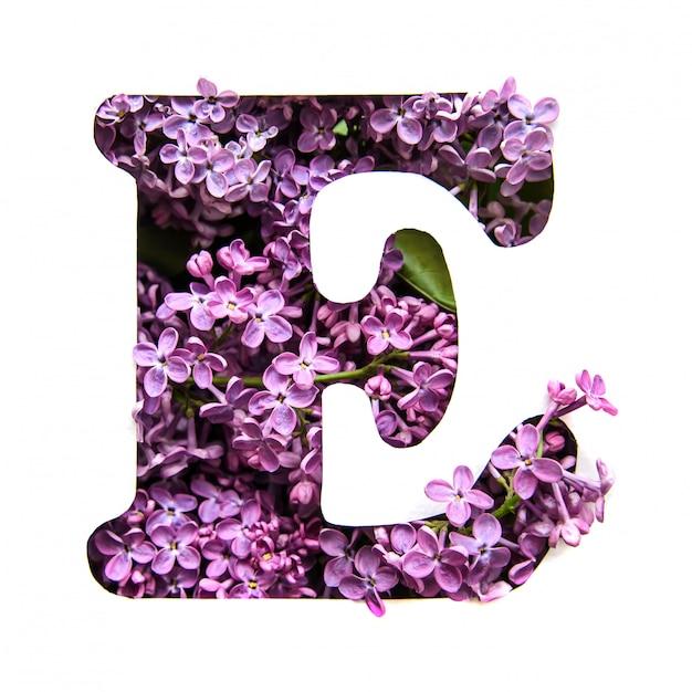 Der buchstabe e des englischen alphabets aus flieder Premium Fotos