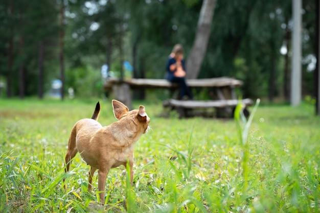 Der hund lief vor dem besitzer davon. pet auf einem spaziergang. Premium Fotos